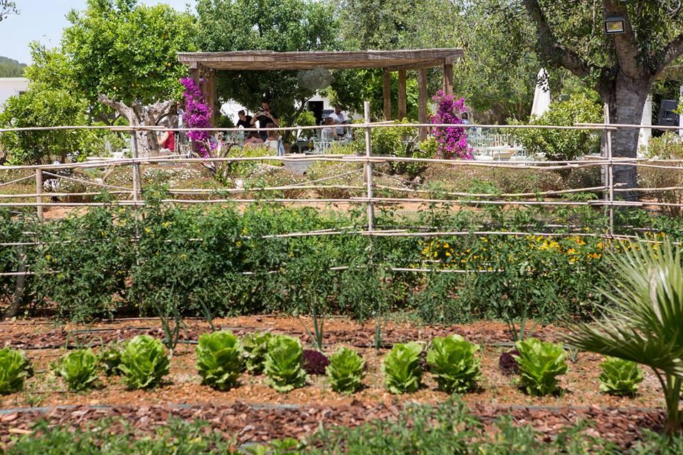 Huerto-Restaurante-Aubergine-Ibiza