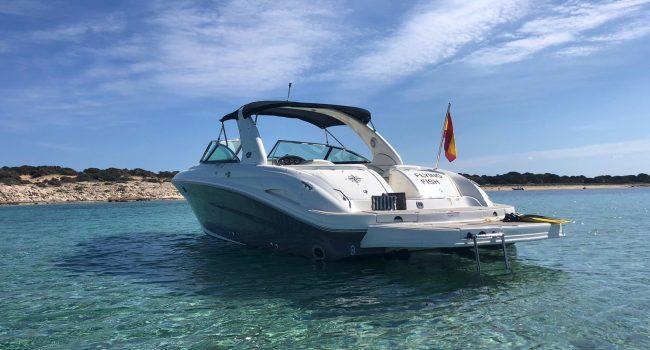 Sea Ray 290 SLX Flying Fish